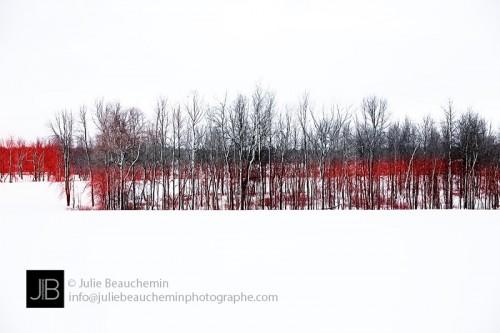 À l'orée du bois rouge © Julie Beauchemin