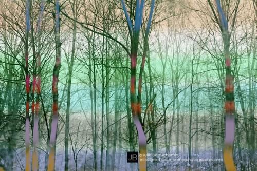 Sa forêt © Julie Beauchemin