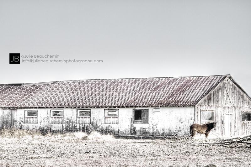 Le cheval, la grange et l'arbre mort© Julie Beauchemin