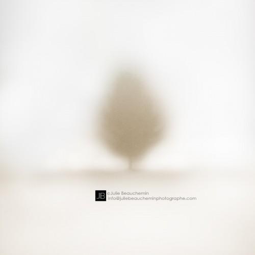 La dignité © Julie Beauchemin