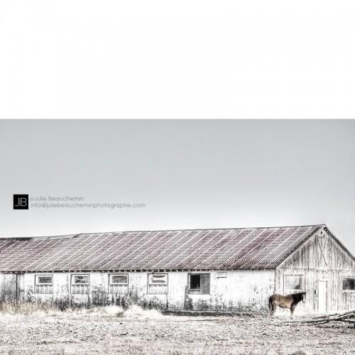 Le cheval, la grange et l'arbre mort © Julie Beauchemin