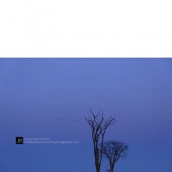 Les arbres, les oies et le harfang © Julie Beauchemin