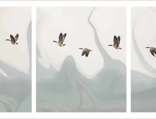 Migrations #1