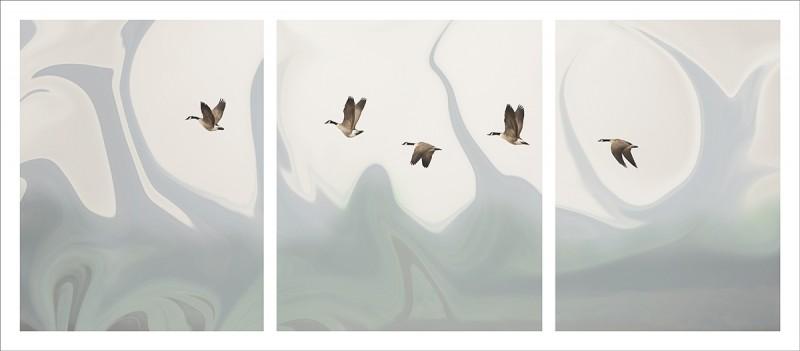 Les oies #1. © Julie_Beauchemin